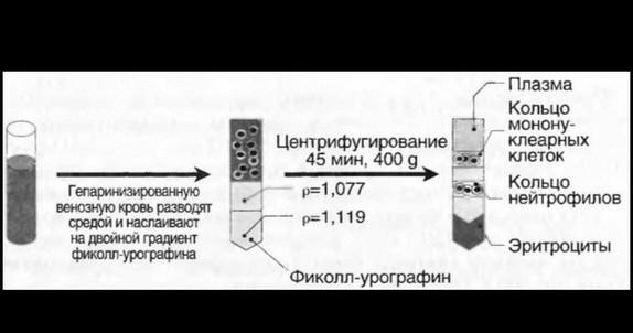 otmivanie-spermi-metod-gradienta-perkolla